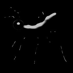 NM_ant